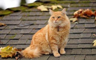Рыжий кот: добрые приметы о солнечном животном