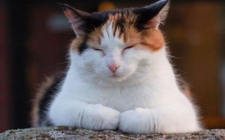 К чему снится парням или девушкам трехцветная кошка