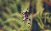 Паук спускается вниз по паутине: толкование приметы
