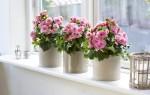 Приметы и суеверия про цветы в доме