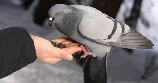 голубь задел крылом голову примета
