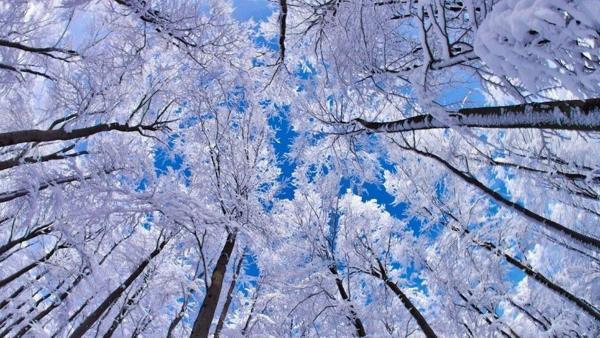 народные приметы декабря о погоде