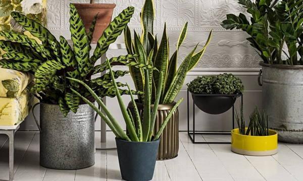 Растения, приносящие деньги