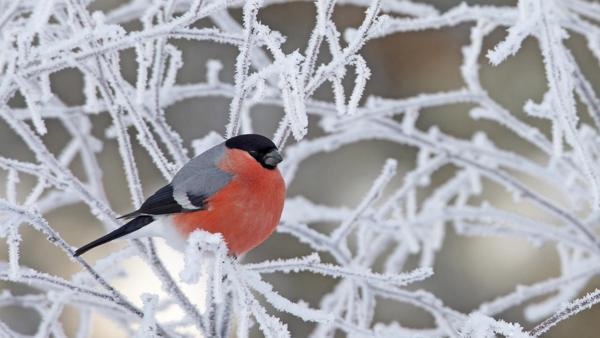 народные приметы о погоде на декабрь