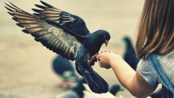 голубь задел крылом лицо примета