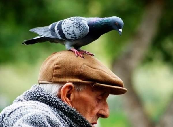 Птица насрала на плечо