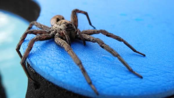 паук в ванной примета