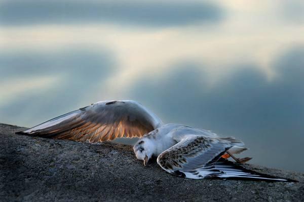 мертвая птица