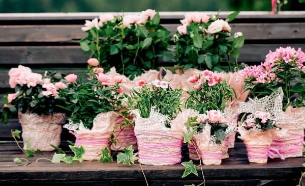 приметы про комнатные цветы