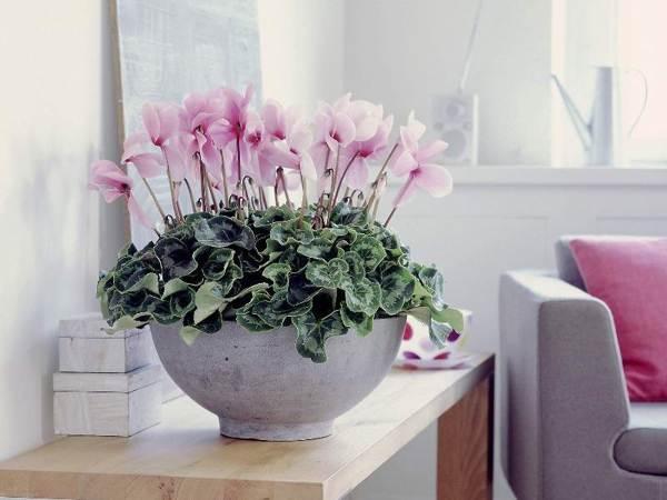 цветы приметы