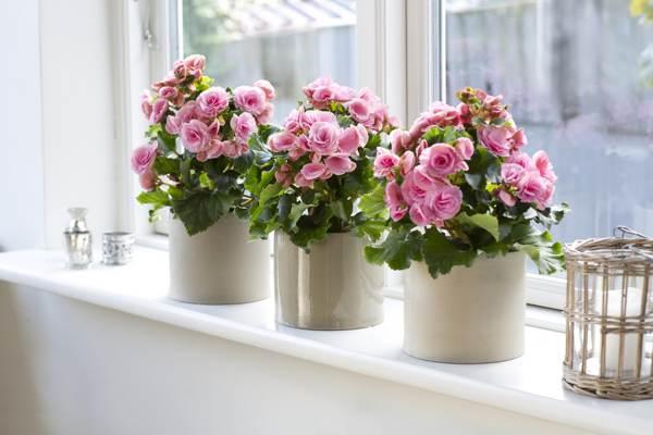 приметы и суеверия цветы в доме