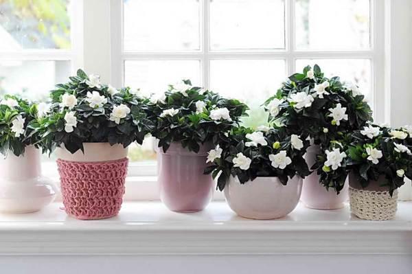 какие цветы нельзя выращивать дома приметы