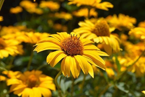Цветы желтые к