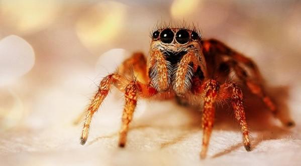 Увидеть паука вечером