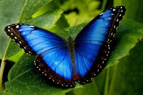 бабочка залетела в квартиру примета