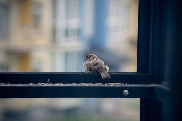 воробей у окна