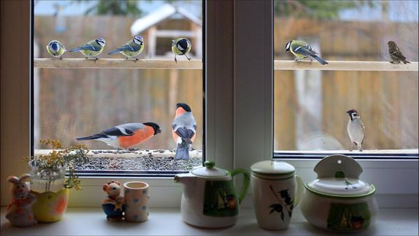 синицы у окна