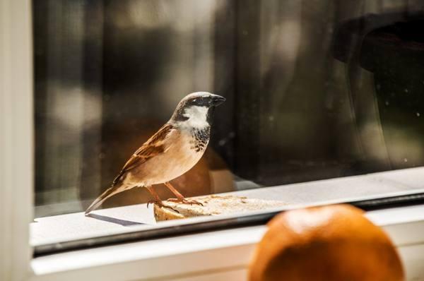 птица возле окна