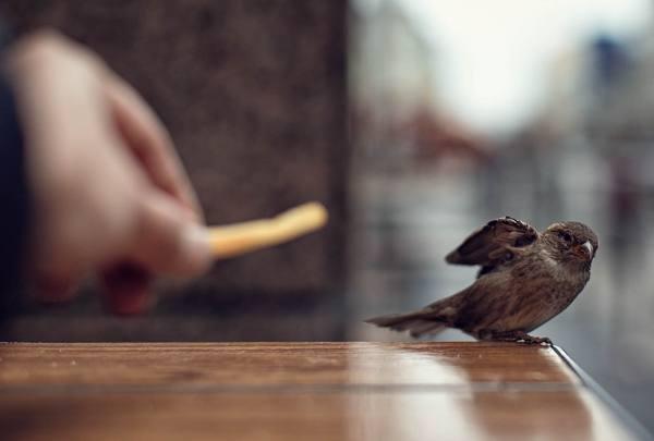птица залетела в дом: приметы