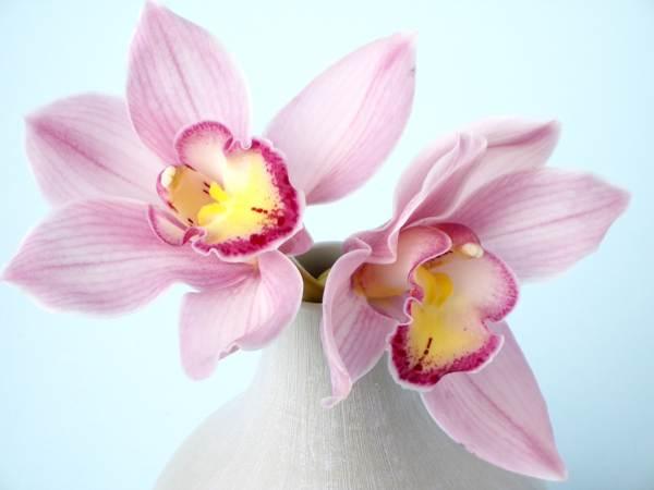 можно ли держать дома орхидеи