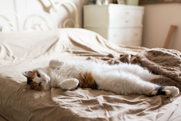 Почему кошка спит в ногах у человека Приметы о кошках