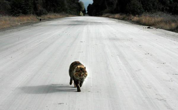 Сбил кошку на машине – народные приметы