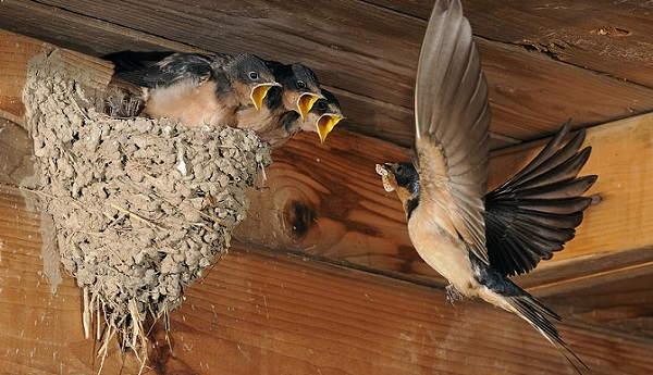 Птицы свили гнездо на балконе