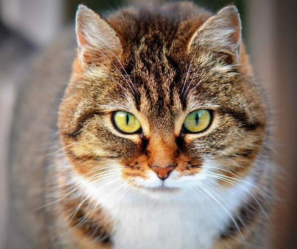 Кошка в доме - Народные приметы