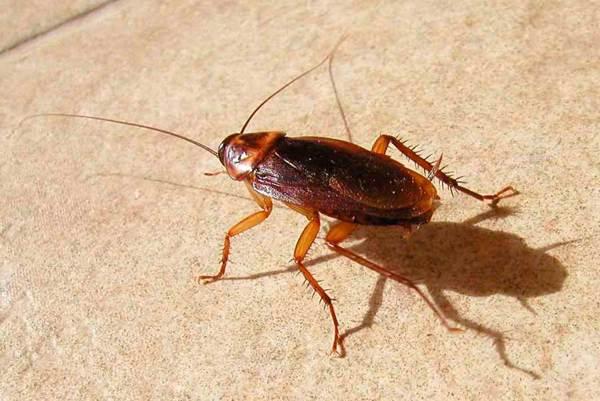 увидеть таракана