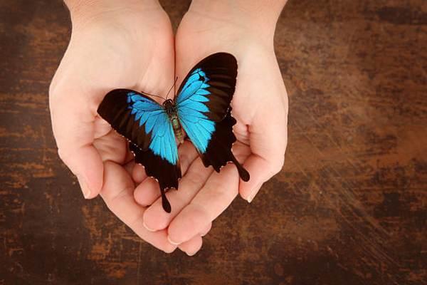 бабочка садится на человека