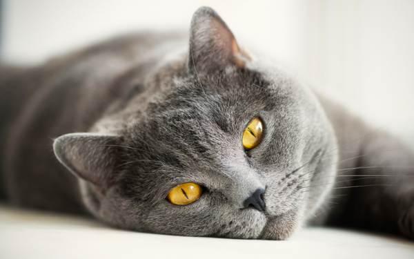 чужая кошка в доме