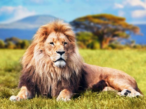 Лев – символ богатства