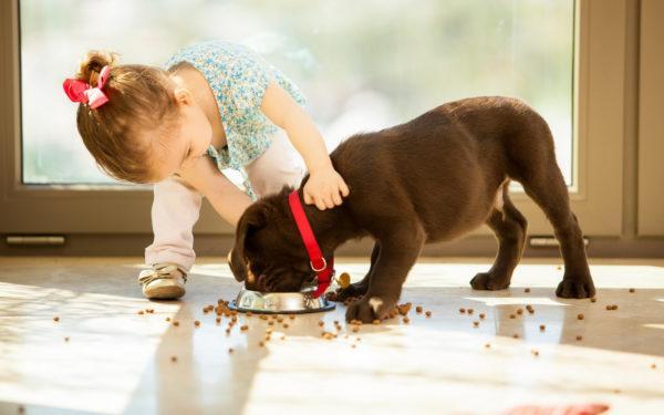 девочка кормит собаку