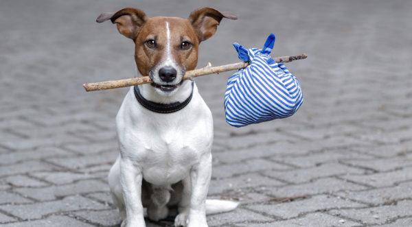 Сонник потерять собаку