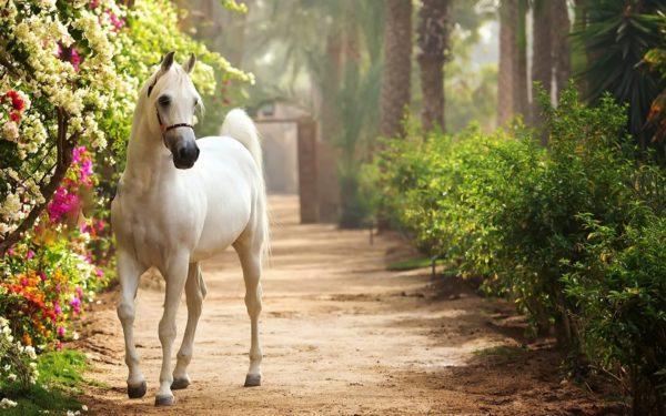 К чему снится белая лошадь