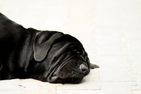Мертвый пес черного окраса