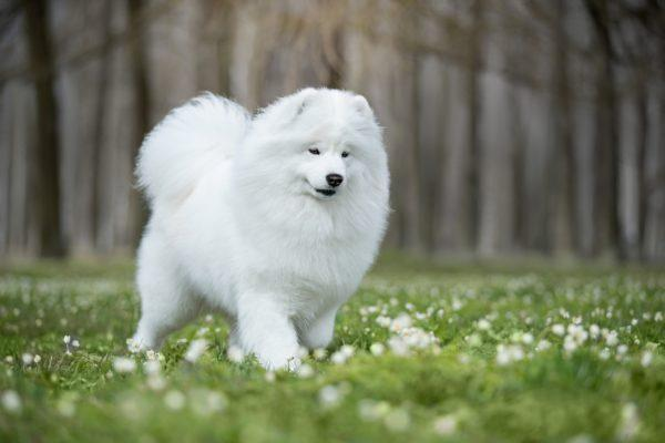 Ухоженная собака