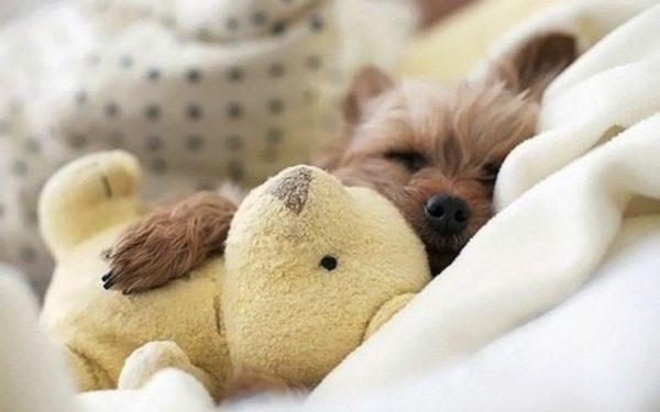 Спящий в доме щенок