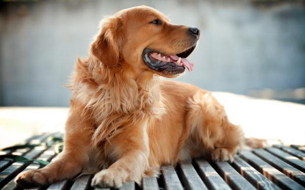 Добрая собака